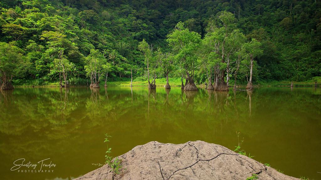line of trees at Lake Kabalin-an