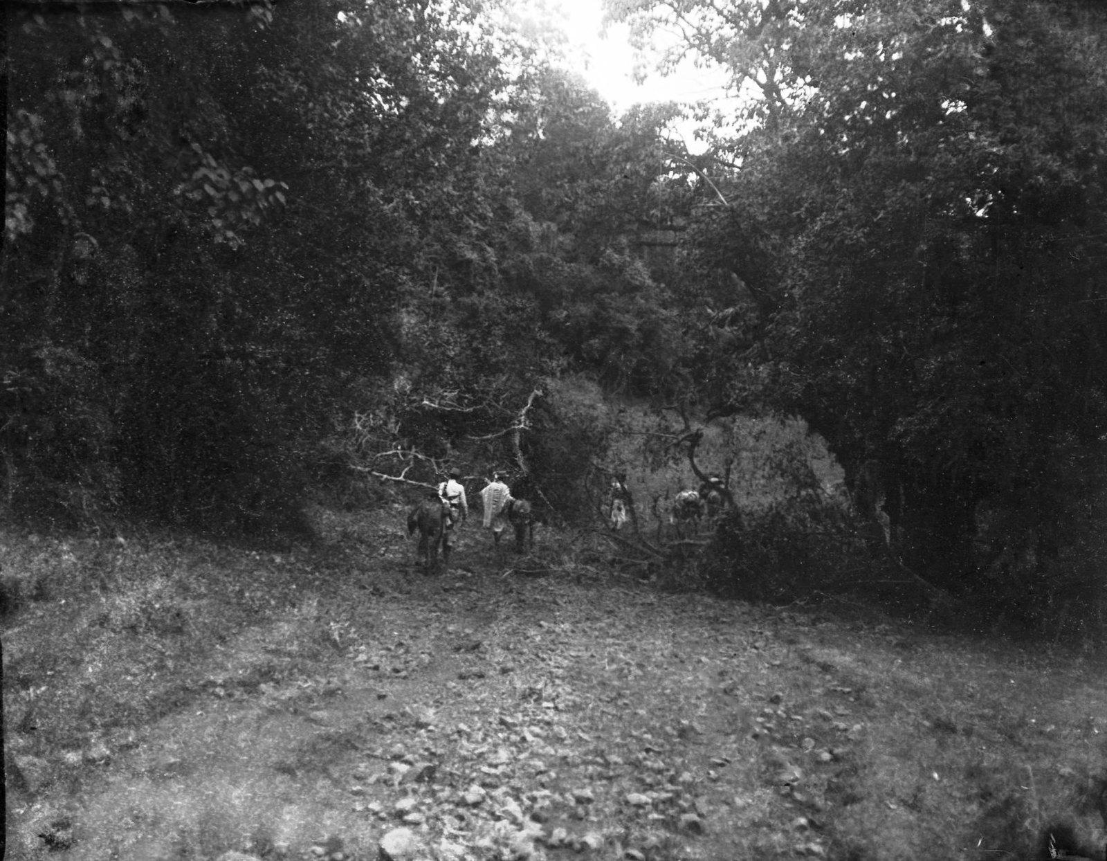 184. Наш караван дорогой в лесу