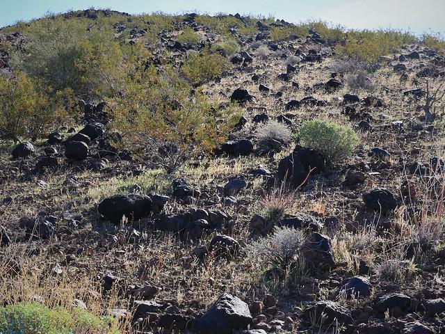 Climbing Bouse Hill 7D2_4956