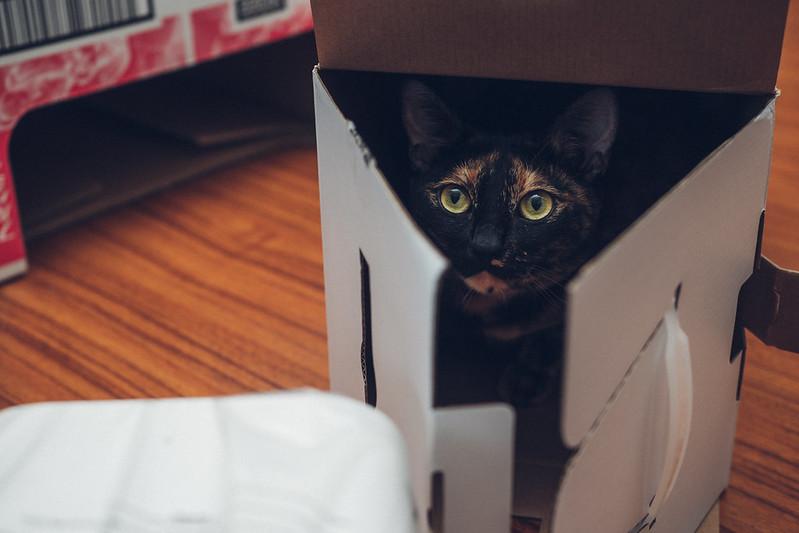 智能寵物餵食器MINI|PETKIT 小佩