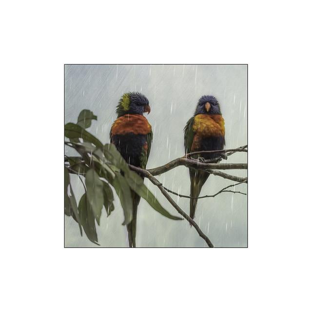 Rain Birds DSC_4125 My Garden Flickr 1/10 X 10 2020