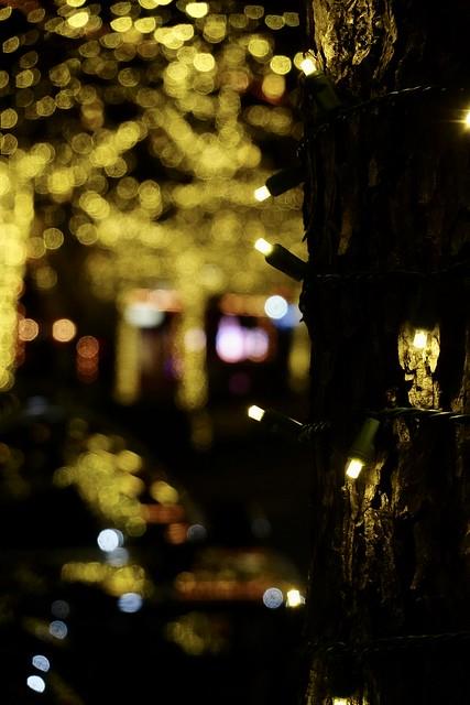 Lights Up A Tree