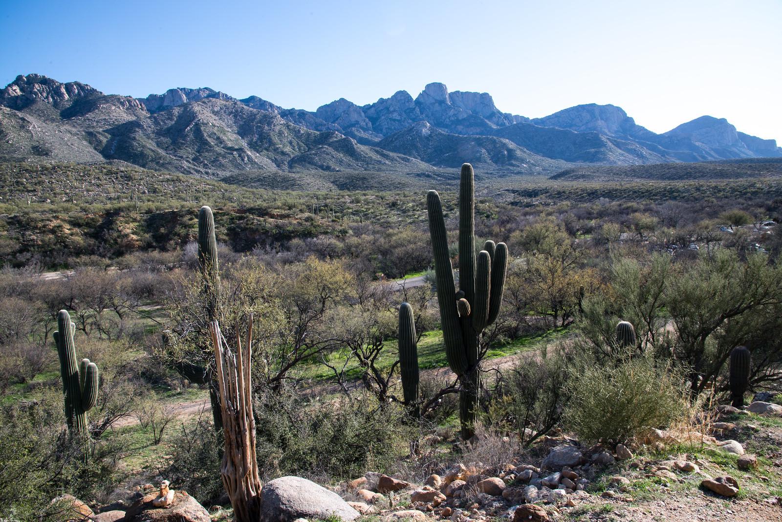 Catalina State Park Tucson Arizona