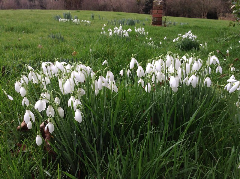 February Flowers at Forty Acres: Snowdrops, Aconites & Daffodils