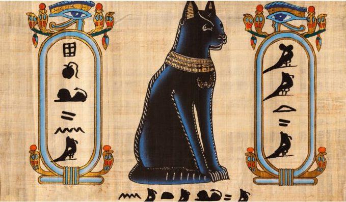 mısır-kedi