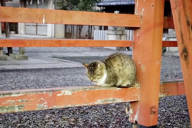 Today's Cat@2020-02-03