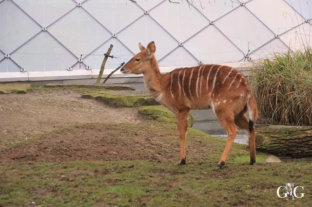 Besuch Zoo Berlin 19.01.202029
