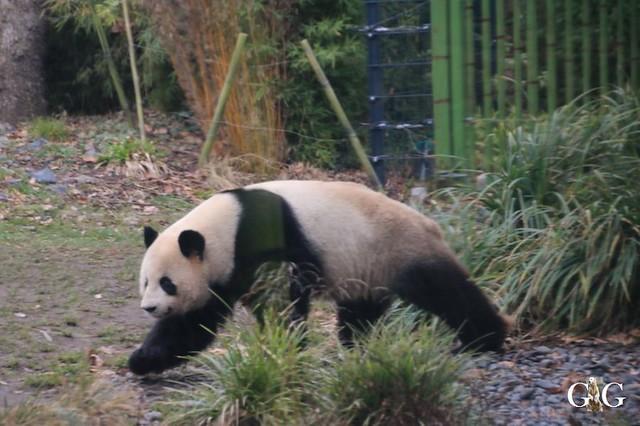 Besuch Zoo Berlin 19.01.20209