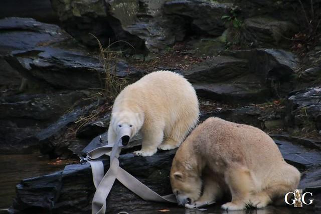 Besuch Tierpark Friedrichsfelde 05.01.2042