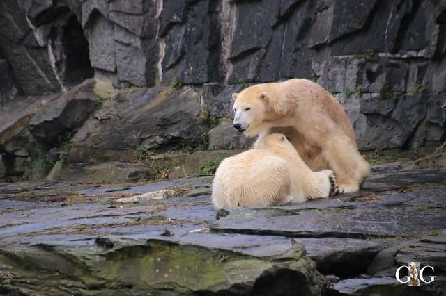 Besuch Tierpark Friedrichsfelde 05.01.2039