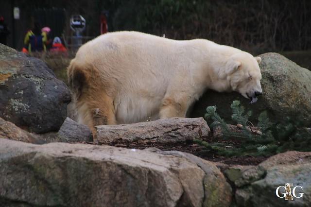Besuch Zoo Berlin 19.01.202016