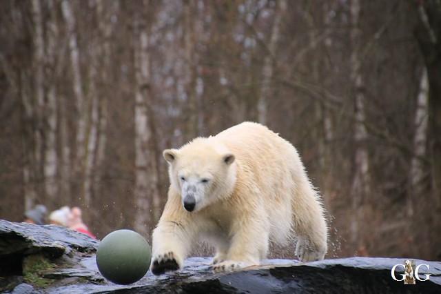 Besuch Tierpark Friedrichsfelde 05.01.2033
