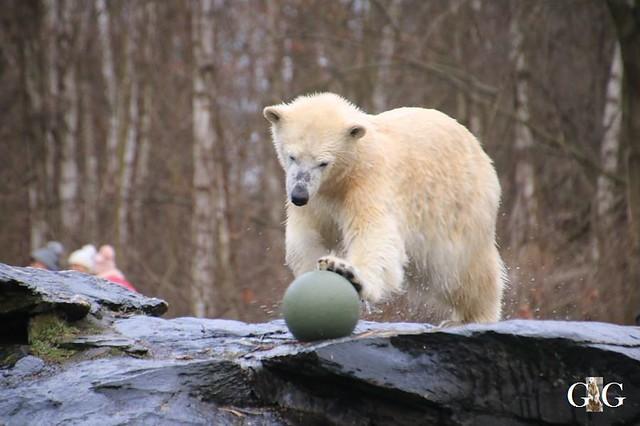 Besuch Tierpark Friedrichsfelde 05.01.2032