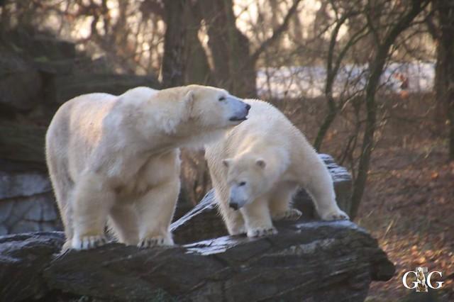 Besuch Tierpark Friedrichsfelde 05.01.2015