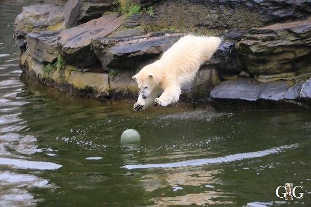 Besuch Tierpark Friedrichsfelde 05.01.2037