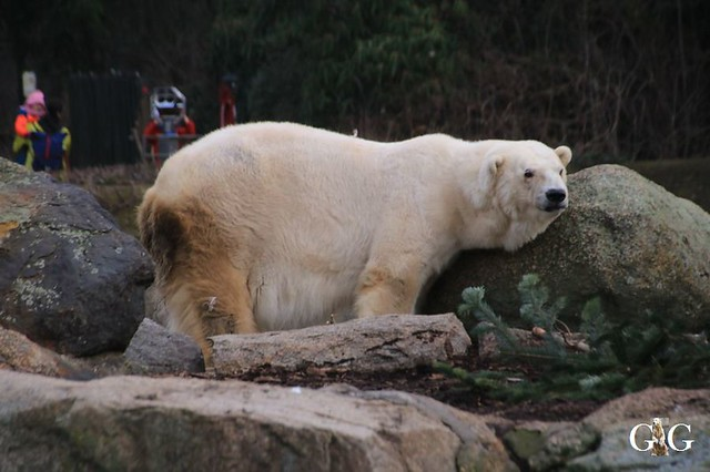 Besuch Zoo Berlin 19.01.202015