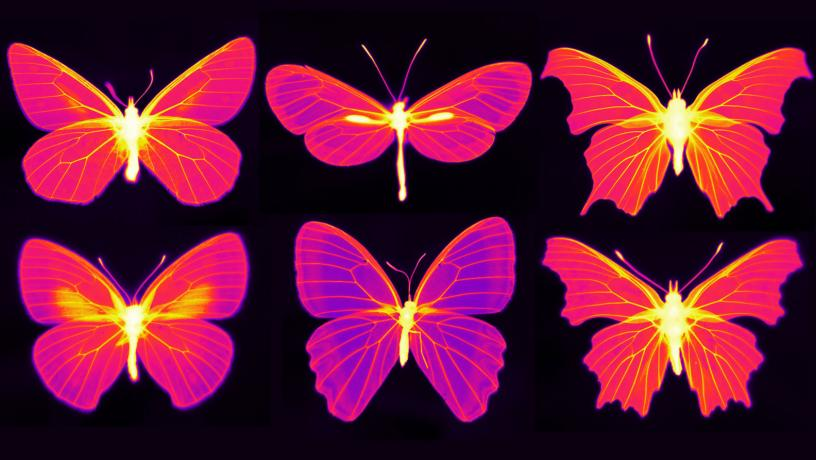 Beating the Heat in the Living Wings of Butterflies