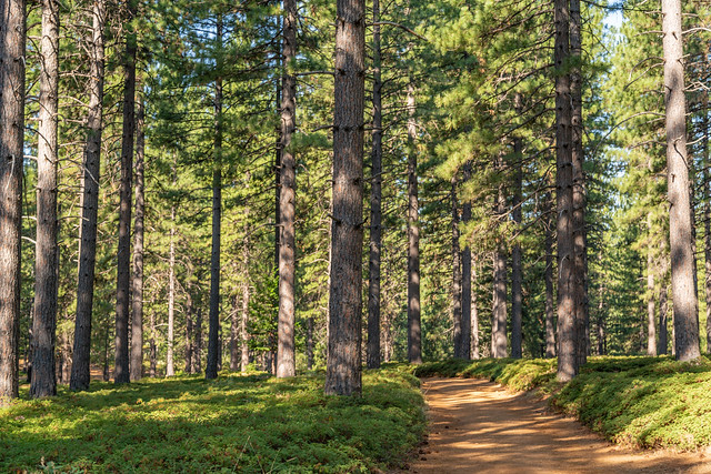 The Rim Trail, Arnold, California