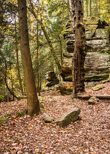 cuyahogavalley cuyahogavalleynp nationalparks ohio theledges unitedstates autumn fall plants tree woods