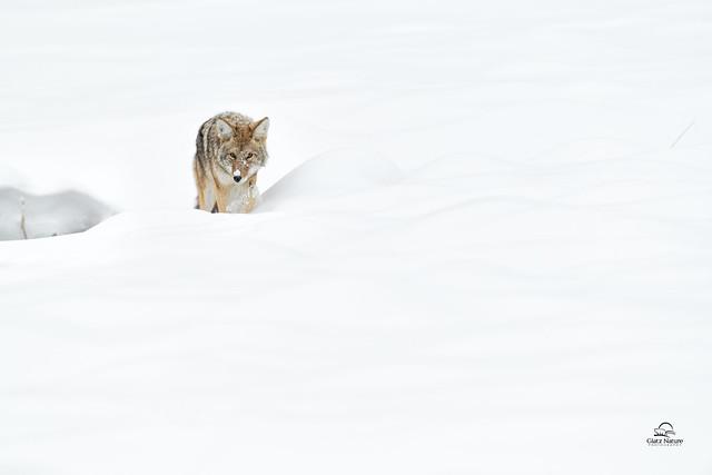 The Battle Against Winter