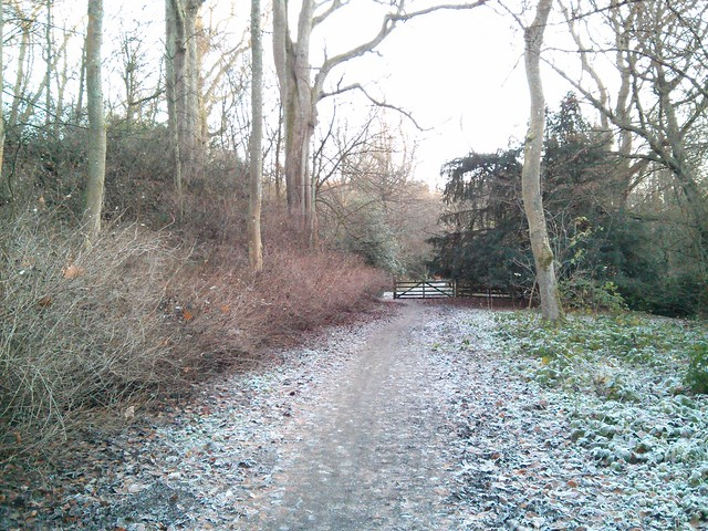 Another Wintry Path
