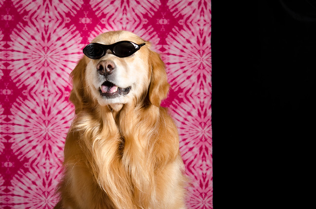 Happy Golden Retriever Day