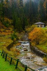 Slovenia woods