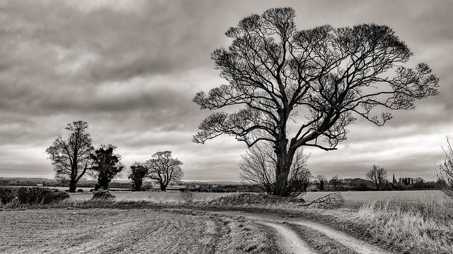 Winter tree's….