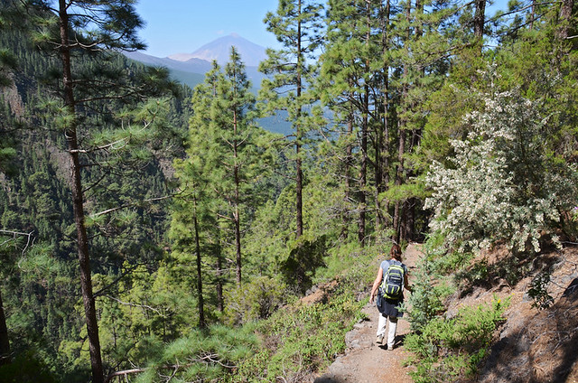 Walking in the pines, Tenerife, Canary Islands