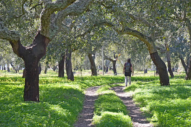 Walking in the cork forest, Palmela, Portugal