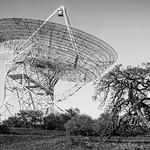 Antenna and Tree