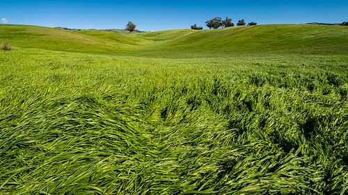 lightinthisworld iphone iphone8plus windy sanjose shotoniphone grass green bluesky nature bayareaphotographer sanjosephotographer sanjoseca bayarea
