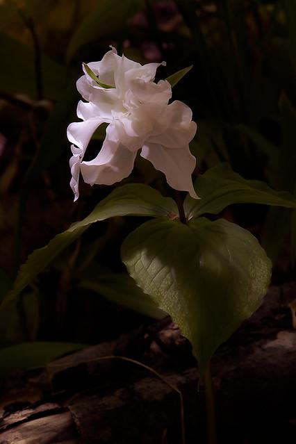 Empire Wildflowers_94