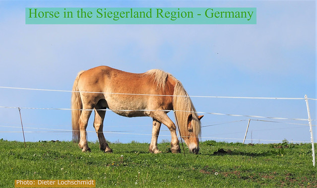 Germany - Little Horse on a Pasture in the Siegerland Region
