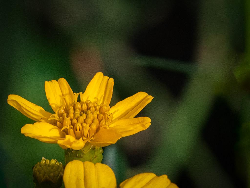 Fleur d'hiver du Jardin des Plantes... 49490468723_191686fc75_b