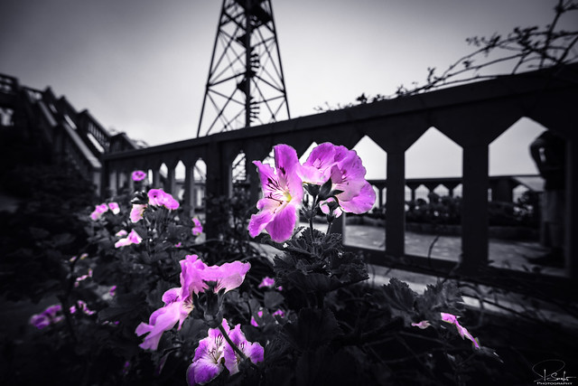 Flowers on Alcatraz - San Francisco - California - USA