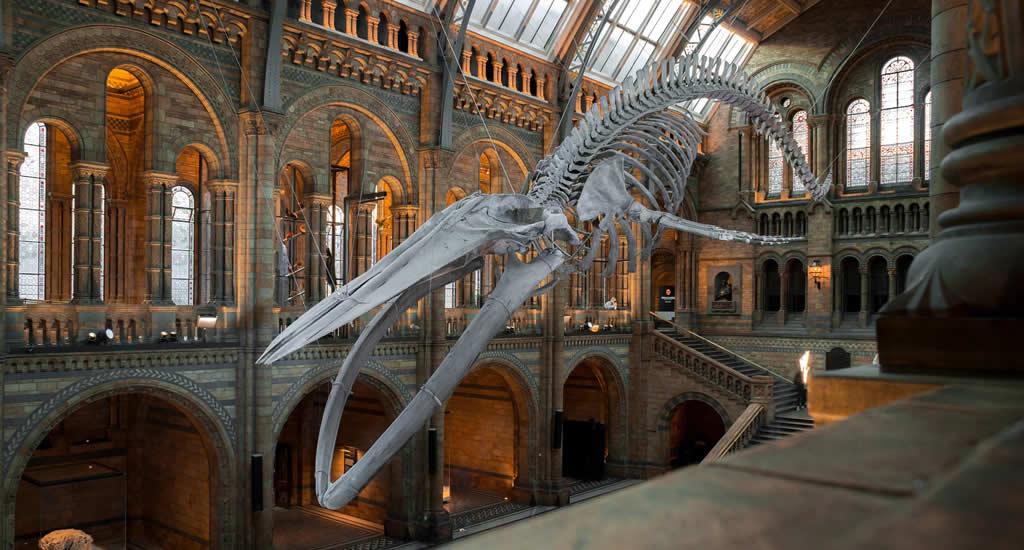 Bezienswaardigheden Londen: Natural History Museum | Mooistestedentrips.nl