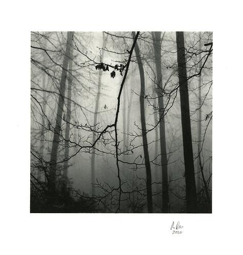 Feb-Wood