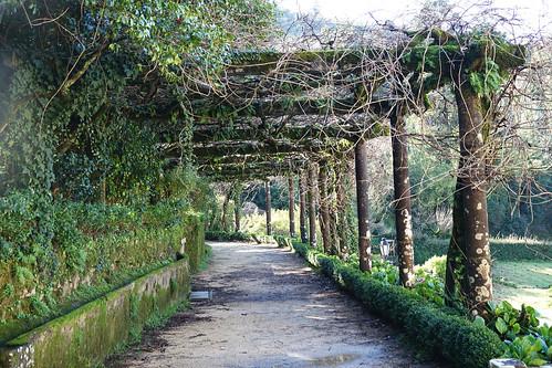 portugal centre luso buçaco parcs payages landscapes