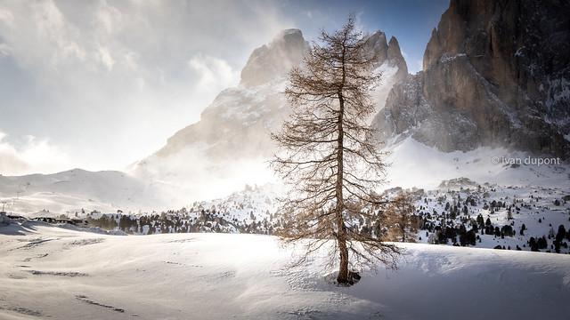 The lonesome tree, Sassolungo, Dolomites, Italia