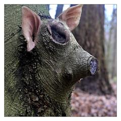 Forest pet