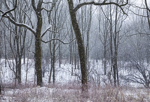 winter cold winterwonderland life nature landscape peaceful wood woodland outdoors snow snowy snowing canon 2020 home flx skaneateles