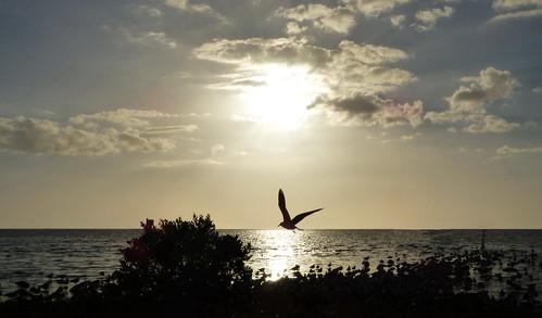 silver sunset beach water nature clouds sky bird florida silhouette