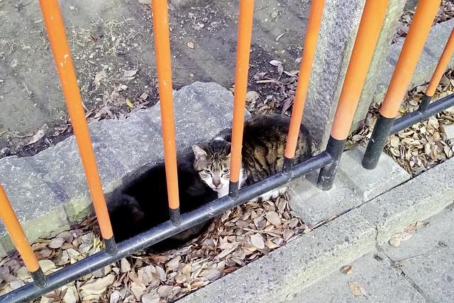 Today's Cat@2020-02-05