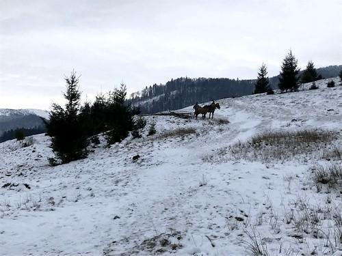 Pylypets és a hegy megerőszakolása