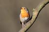A Robin enjoying the February sun in Eastville Park