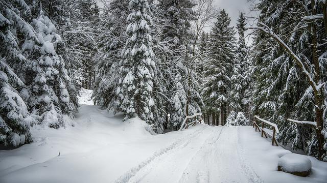 The path not traveled yet - Der jungfräuliche Weg