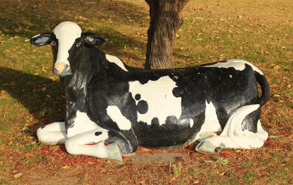 Model cow