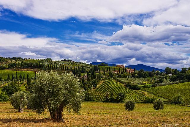 La campagna patrimonio dell'UNESCO. - The UNESCO heritage Countryside. Castelnuovo dell'Abate - Montalcino