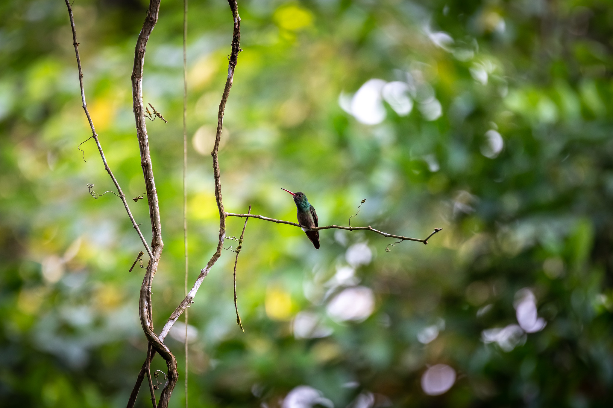 Horquetas - [Costa Rica]